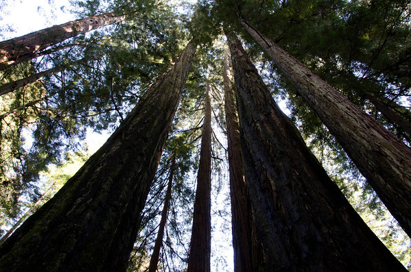 Armstrong Redwood Reserve