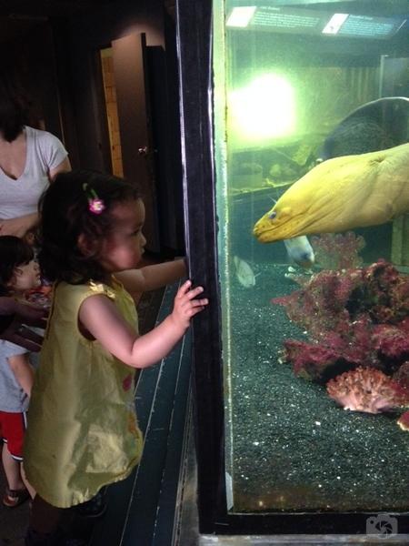 Weissfest 2014 - Staten Island Zoo 18.jpg