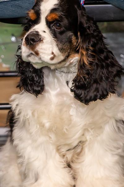 on Command dog Training June 2019-5080.jpg
