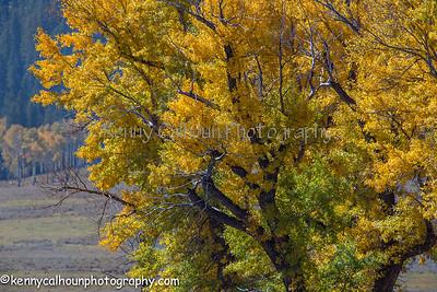 2014 Montana and Wyoming