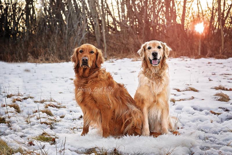 Ellie and Sawyer1 web.jpg