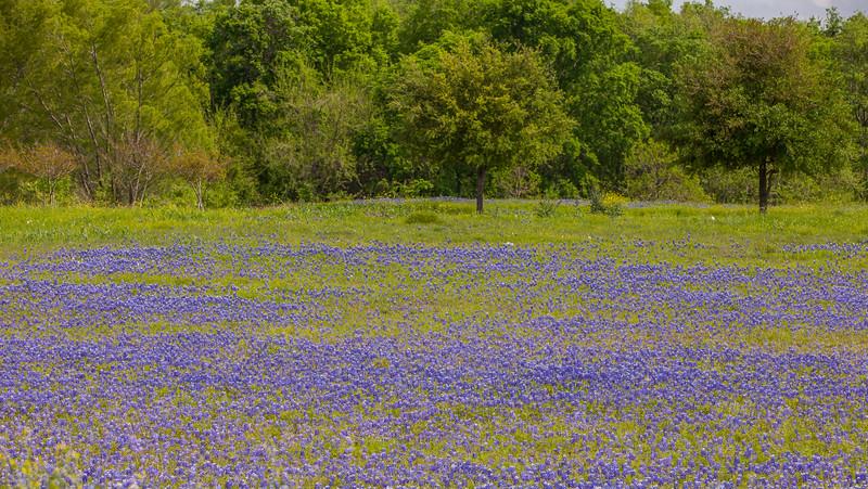 2015_4_3 Texas Wildflowers-7894.jpg