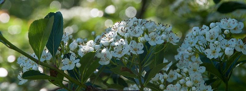 015-flower-wdsm-13may16-851x315-007-8900