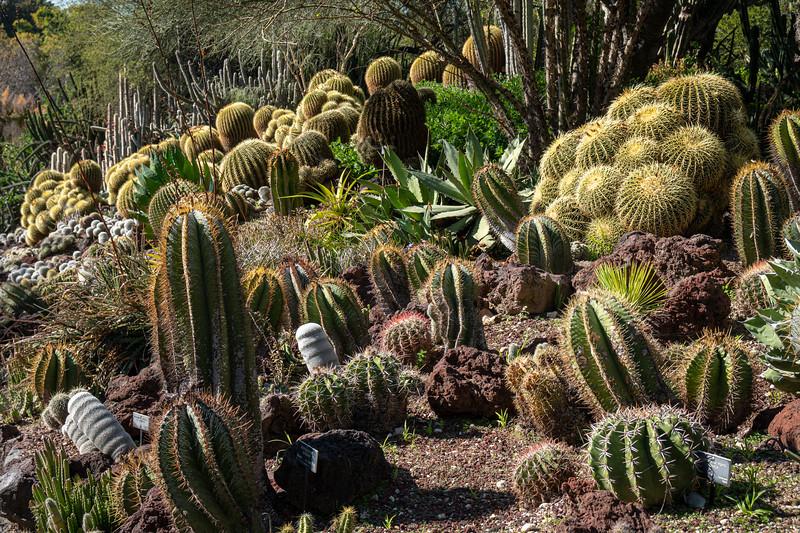 Cacus dot a slope in the Desert Garden of the Huntington