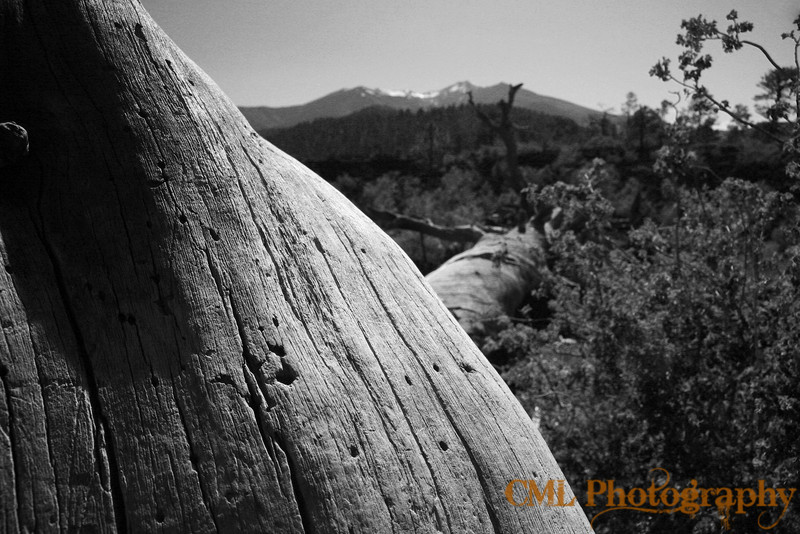 A fallen tree in Sunset Crater National Monument.  In the distance are the San Francisco Peaks.