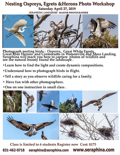 Nesting Birds Osprey Photo Workshop.jpg
