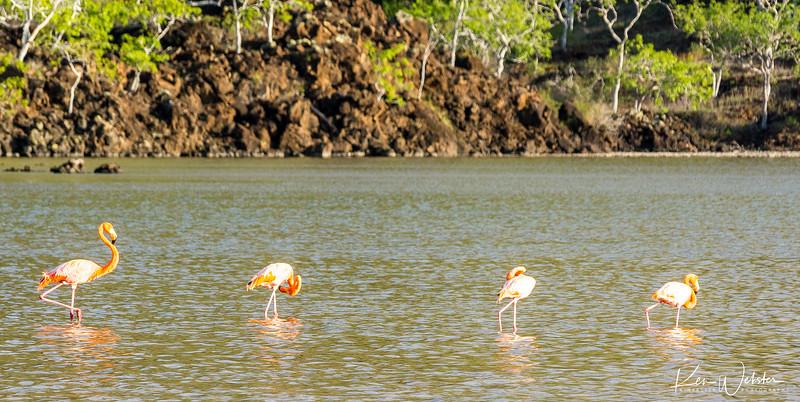 2018 Punta Cormorant-15.jpg