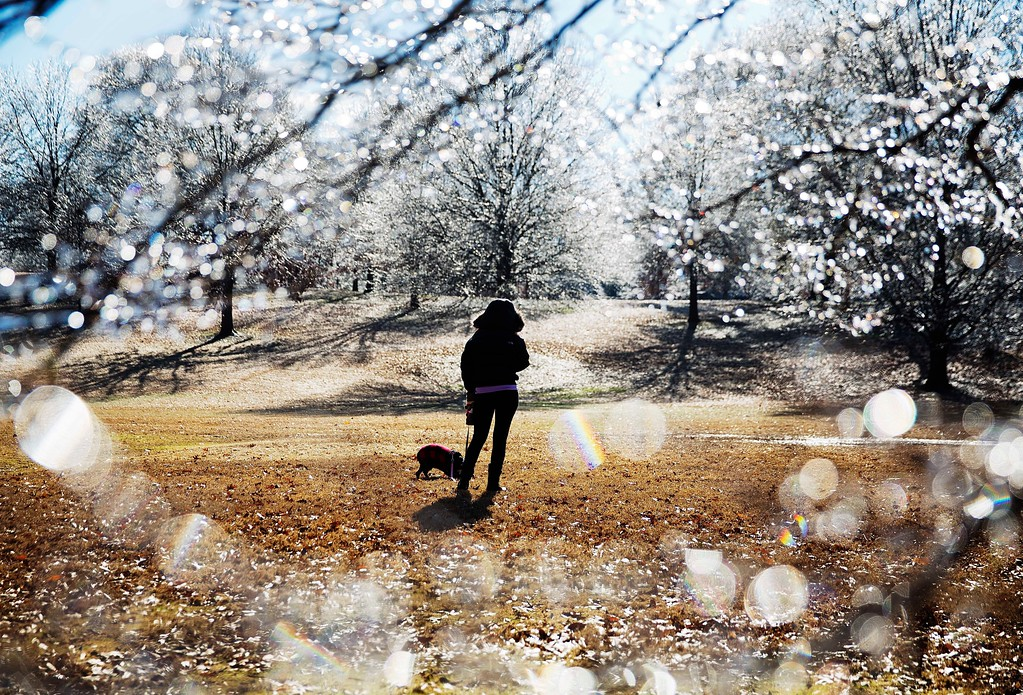 . A woman walks her dog near ice-covered trees in Atlanta\'s Piedmont Park after a winter storm passed through on Saturday, Jan. 7, 2017. Snow and sleet pounded a large swath of the U.S. East Coast on Saturday, coating roads with ice and causing hundreds of crashes. In Atlanta and parts of Georgia, people who were expecting a couple of inches of snow instead woke up to a thin coat of ice. (AP Photo/David Goldman)