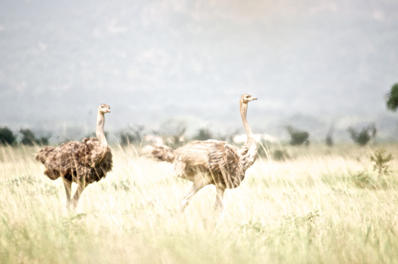 Kenya.Card3.02.2014 249