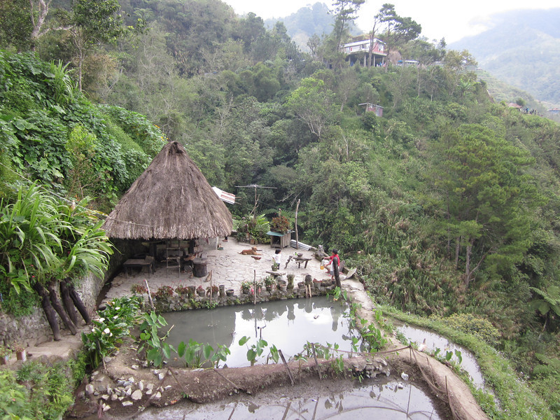 Traditional Hut