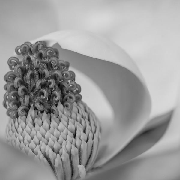 Magnolia 29
