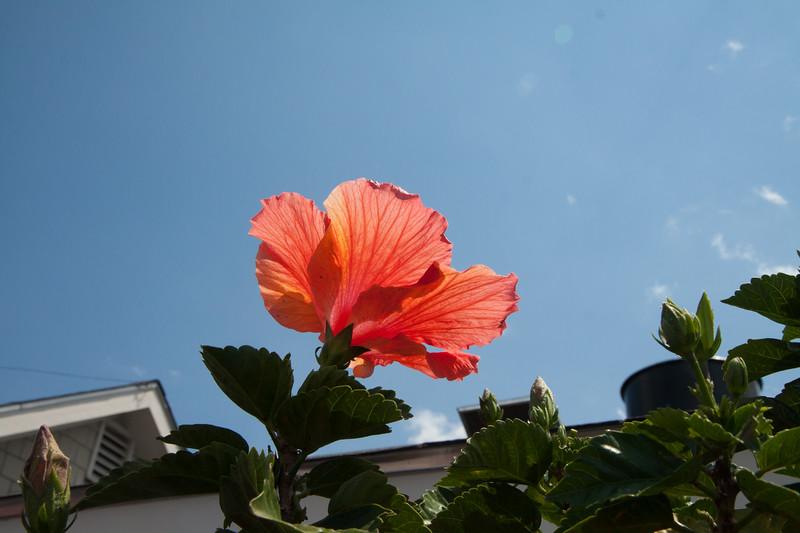 2012 07 08_Newport_3031.jpg