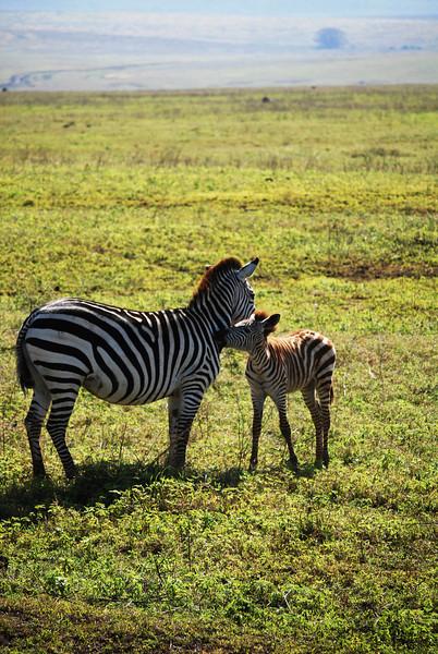Ngorongoro (49).JPG