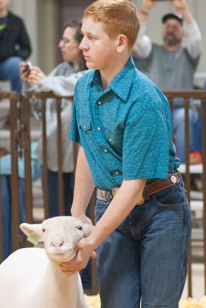 kay_county_showdown_sheep_20191207-19.jpg