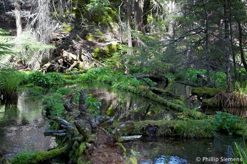 Headwaters of Jack Creek