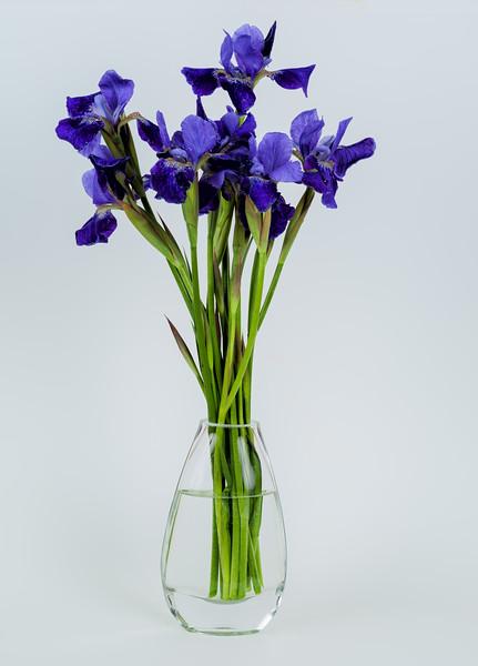 2017-05-14 Iris