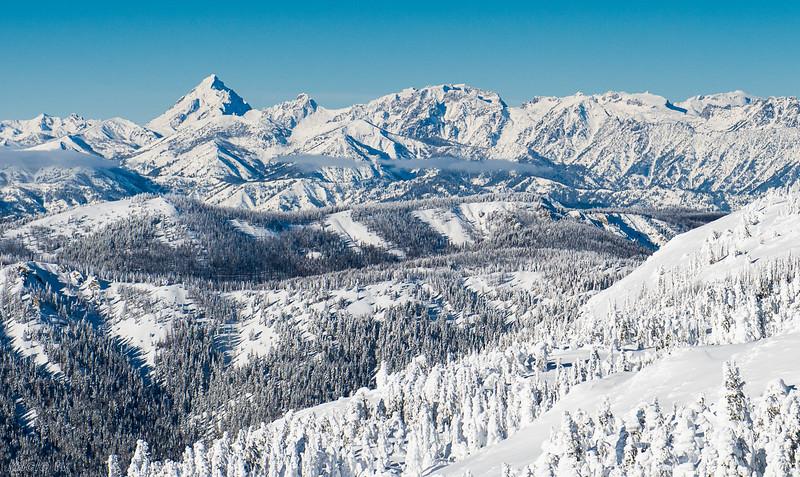 Wilder-AlpenRose-.jpg