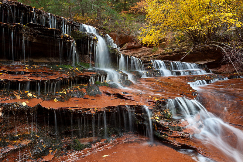 Along the hike to the Subway, the Left Fork of the North Creek flows over these slabs of stair-stepped sandstone, creating beautiful cascades.
