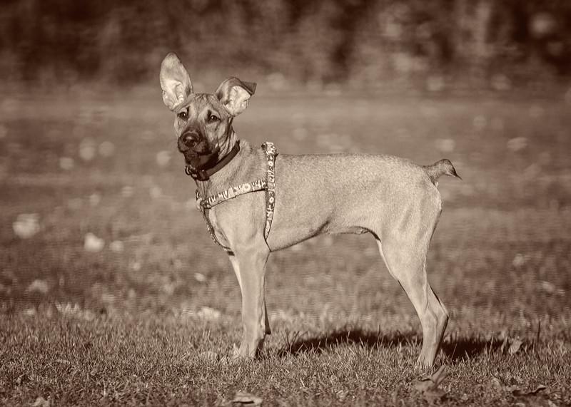 Roxy Standing Tall_sepia-2.jpg