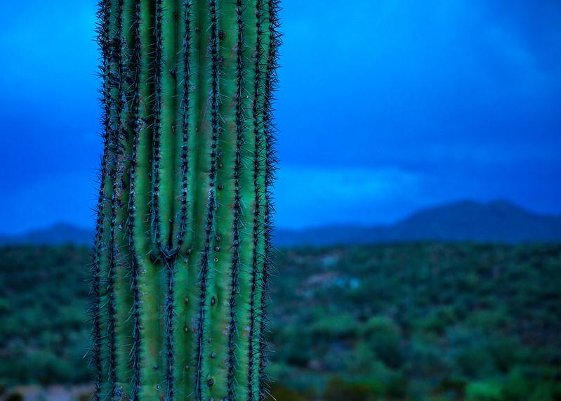 AZ_PH_Cactus Close-up-.jpg