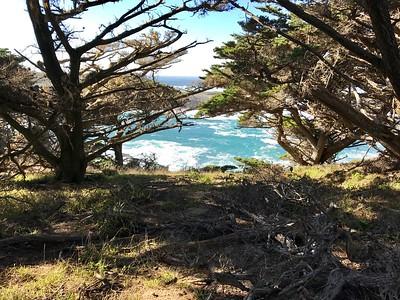 Point Lobos --Cypress Grove Loop