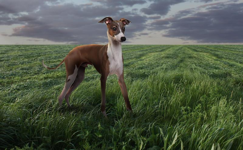 prairie-dog.jpg