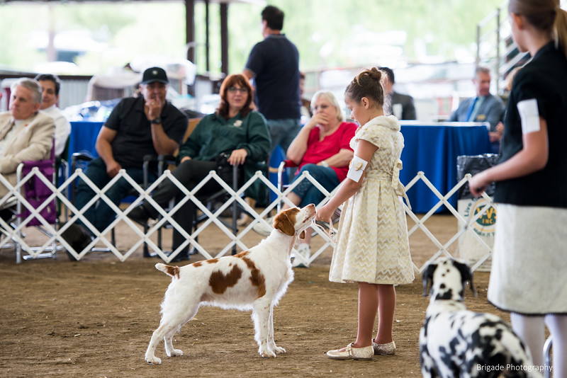 2019 Malibu Kennel Club-9614.jpg