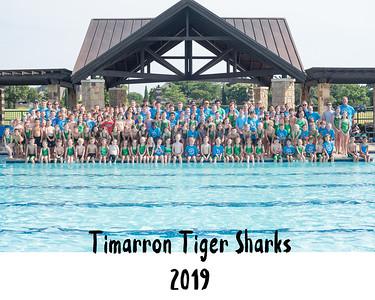 Tiger Sharks 2019