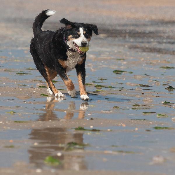 honden-05657.jpg