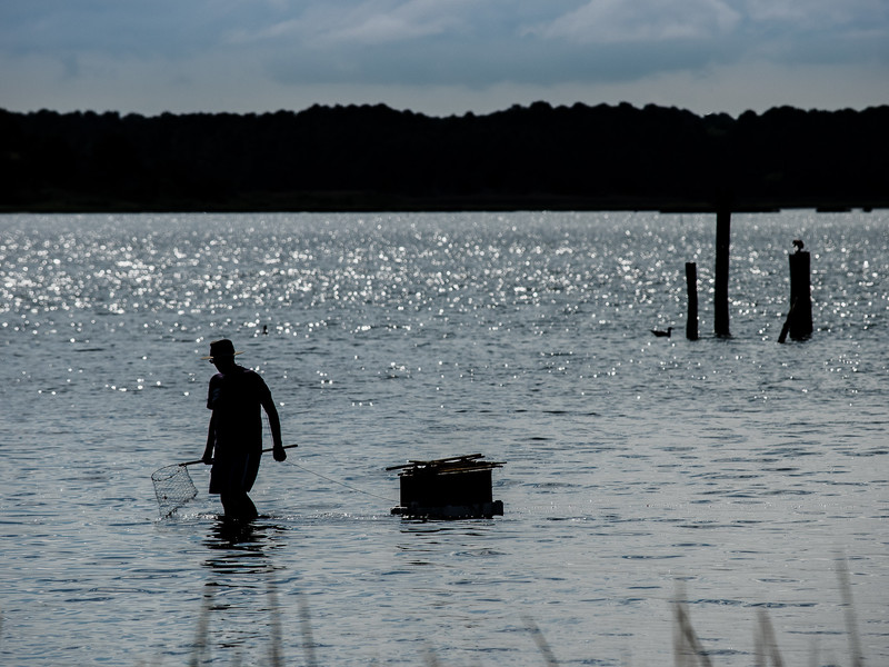 Fisherman Setting His Lines