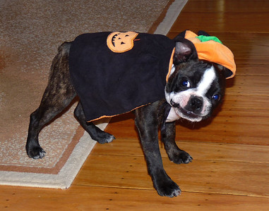 Puppy Halloween Costume