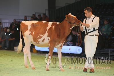 Swiss Expo Holstein Red & White Hfr15