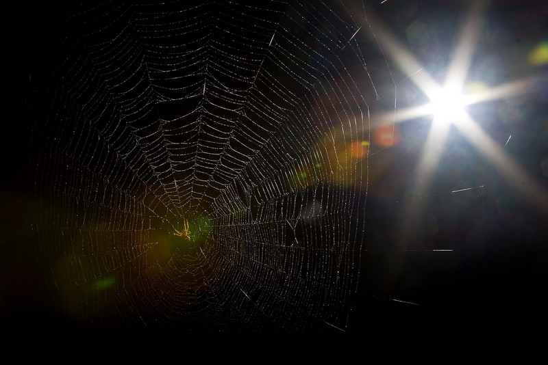 Spiderman-99.jpg
