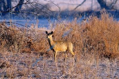 Mississauga Wildlife