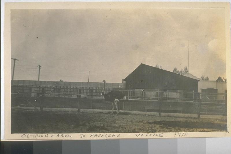 OstrichFarm-SouthPasadena-1910.jpg