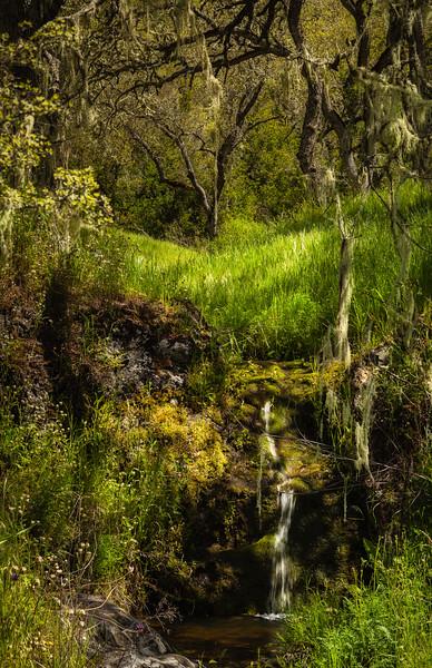 Stream, Henry Coe State Park, California, 2010