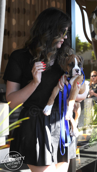 Khloe Kardashian Shows Off Boxer Puppy Bee!