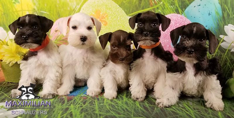 Mystic pups 028.jpg