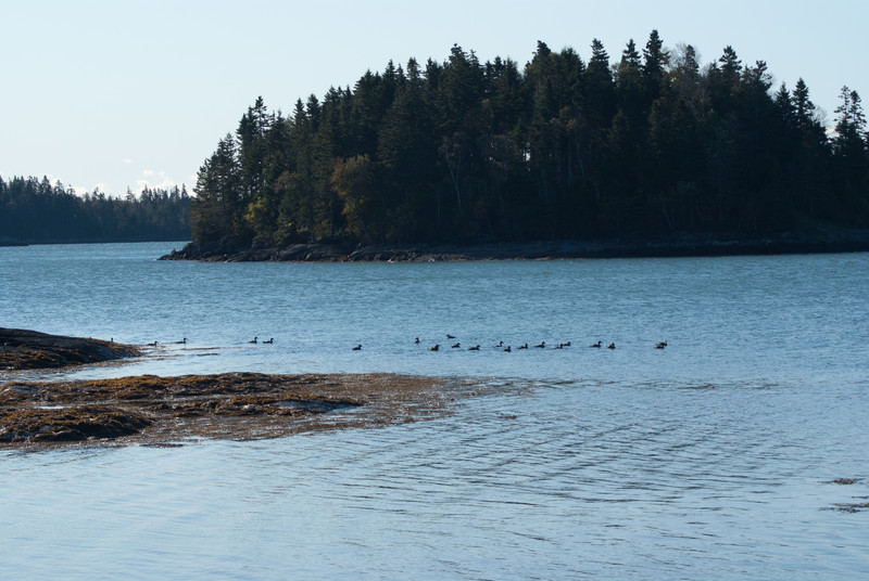Maine Vacation-02885.jpg