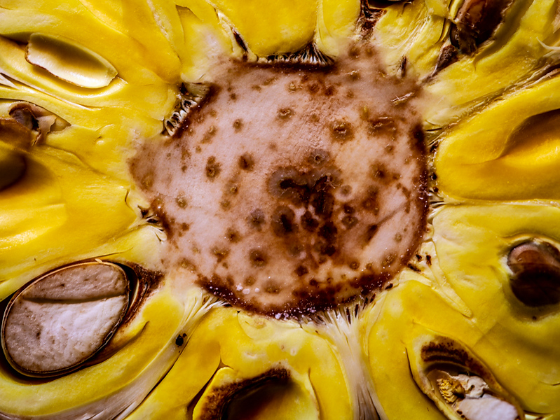 April 30 - Eye of a Jackfruit.jpg