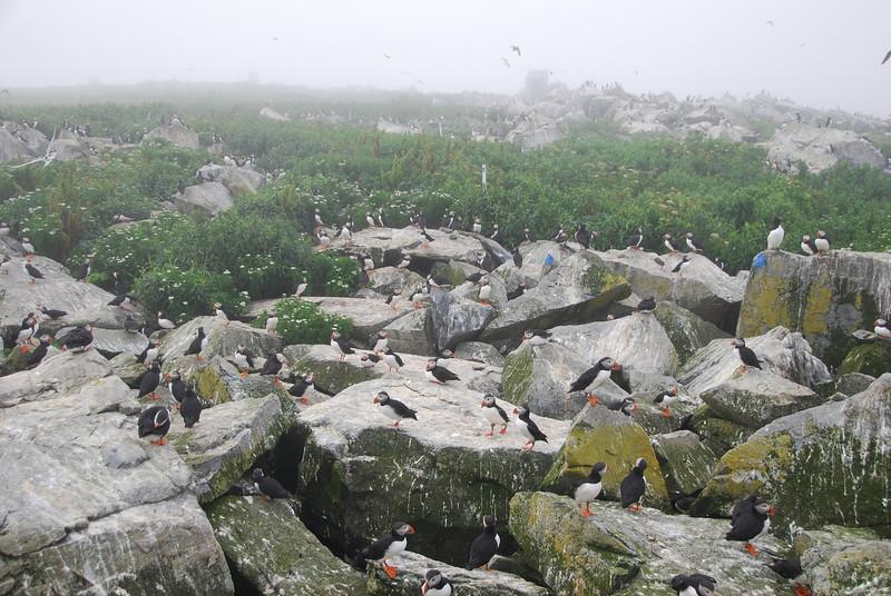 Machias Seal Island Trip - 090