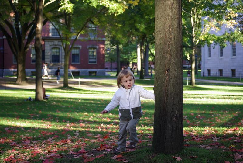 Autumn in Harvard Yard.