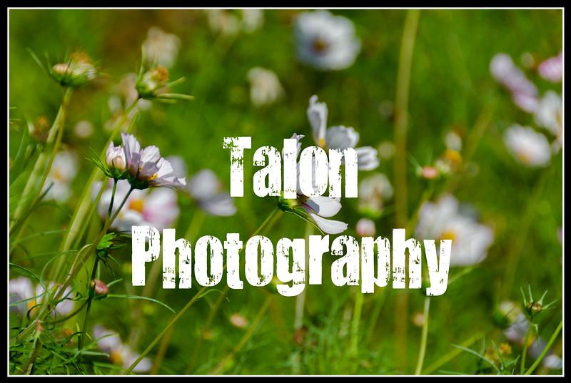flower border TP.jpg