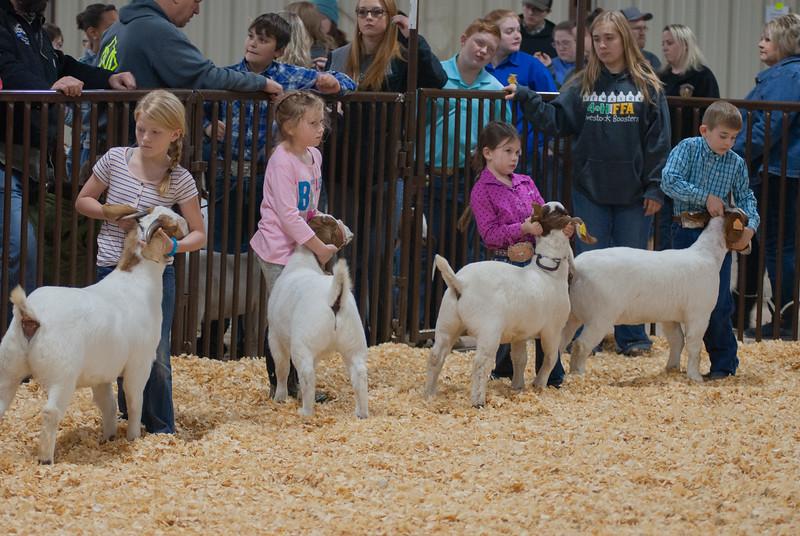 kay_county_showdown_goats_20191207-17.jpg