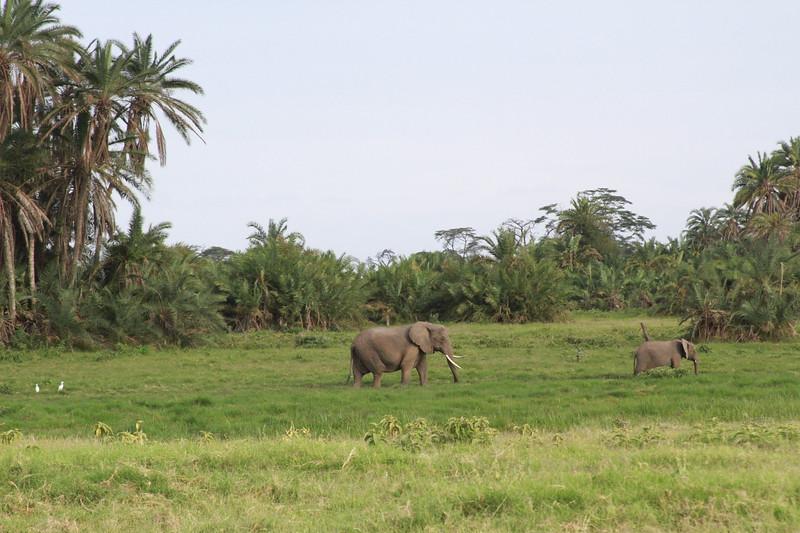 Kenya 2019 #2 563.JPG