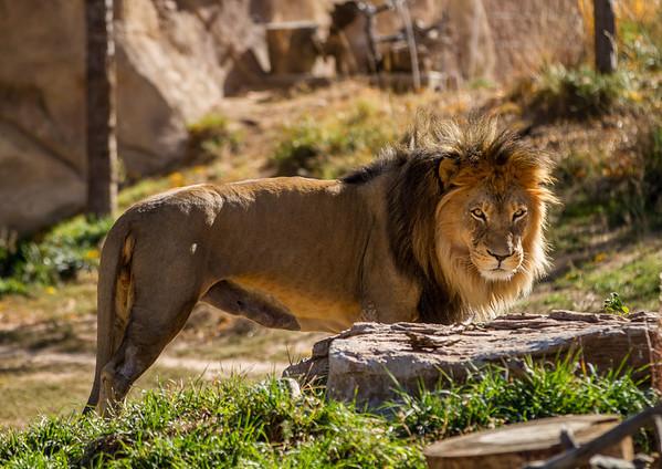 Denver Zoo 10-21-12