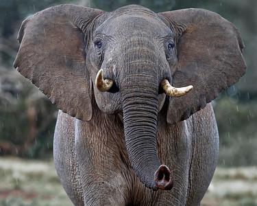 Elephant Gallery