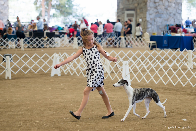 2019 Malibu Kennel Club-0220.jpg