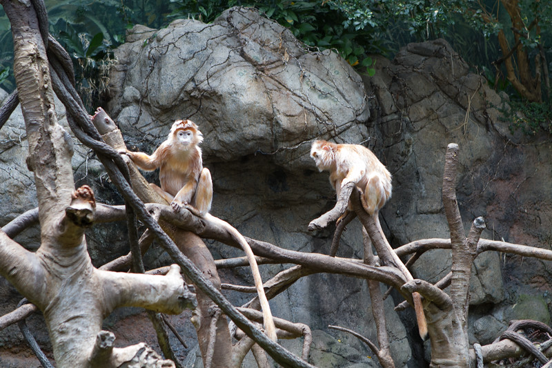 bronx_zoo-21.jpg