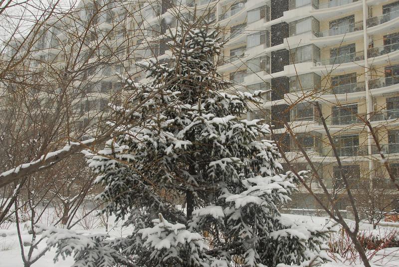 [20100103] 1st 2010 Snow in Beijing (27).JPG